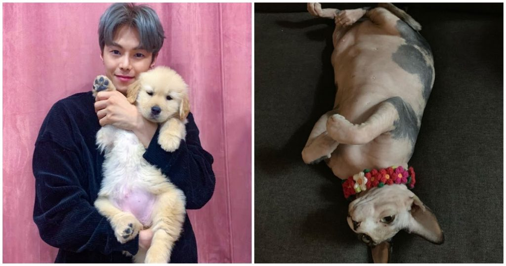 Park Eun Seok's Best Friend of 15 Years Comes To The Actor's Defense Amidst Animal Hoarding Controversy